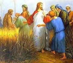 C A M M I N O d i F E D E: Il regno dei cieli è simile a un uomo ...