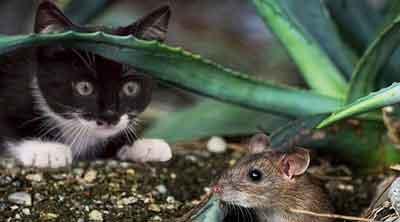 Pengertian dan Jenis-jenis Adaptasi Makhluk Hidup Terhadap Lingkungan