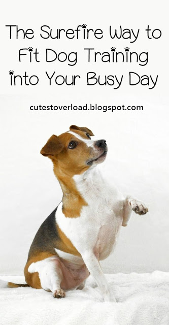The Surefire Way to Fit Dog Training into Your Busy Day