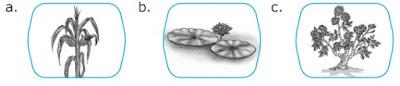 Soal IPA Kelas 2 Bab 2 – Hewan dan Tumbuhan di Sekitarku
