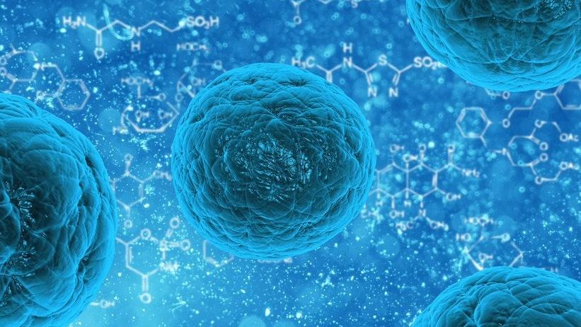 Ringiovanire le cellule umane: sensazionale scoperta scientifica sul Ringiovanimento | Scienza News