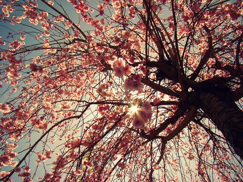 flower tumblr