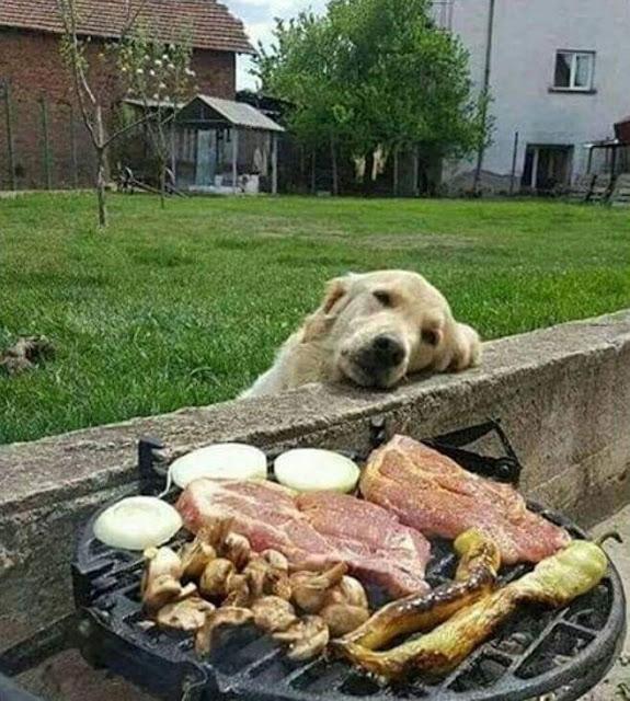 gula perro que ve asado del vecino