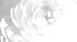 تفسير رؤية اللون الأبيض في المنام بالتفصيل