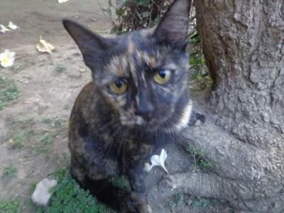 Alasan dan Penyebab Mata Kucing Bersinar di Malam Hari ( Kenapa Bisa Bercahaya Dalam Gelap ? )