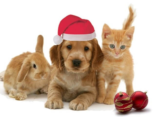 2017 Merry Christmas images with animals