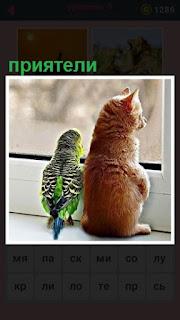 кошка и попугай как приятели сидят около окна