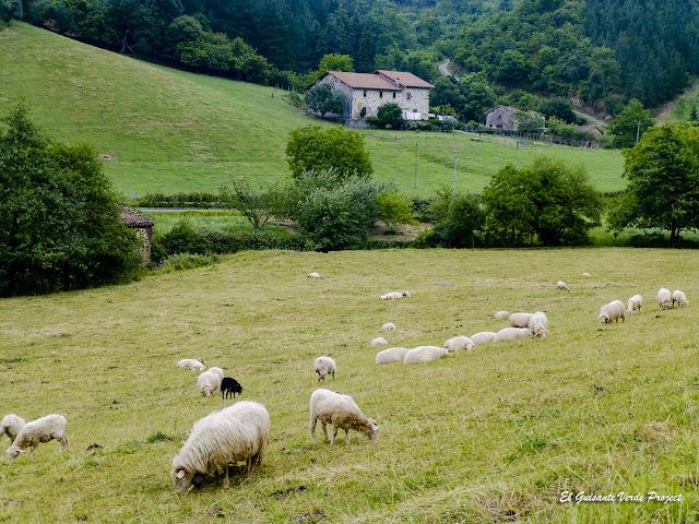 Via Verde Arrazola, ovejas pastando por El Guisante Verde Project