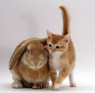 Cute and Cuddly Furry Animals (Photos) | PETA |Cute Fluffy Talking Animals