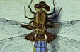 It`s About Time