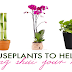 3 Powerful Indoor Plants That Can Help Bring You Money, Luck, And Prosperity In Your Life!