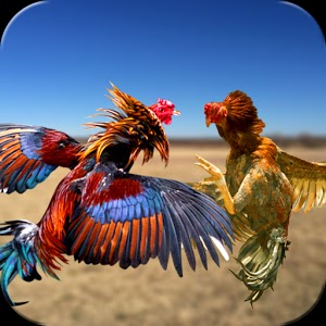 Farm Deadly Rooster Fighting APK