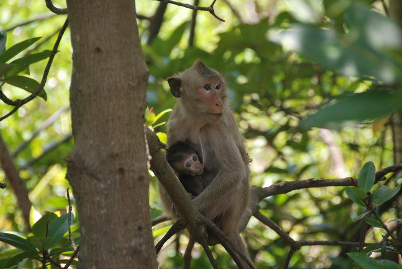 Hai chú khỉ con trong khu du lịch Vàm Sát, Cần Giờ
