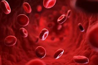 7 aliments à privilégier pour augmenter les plaquettes sanguines