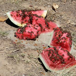 Τα φρούτα ως τροφή των μελισσών
