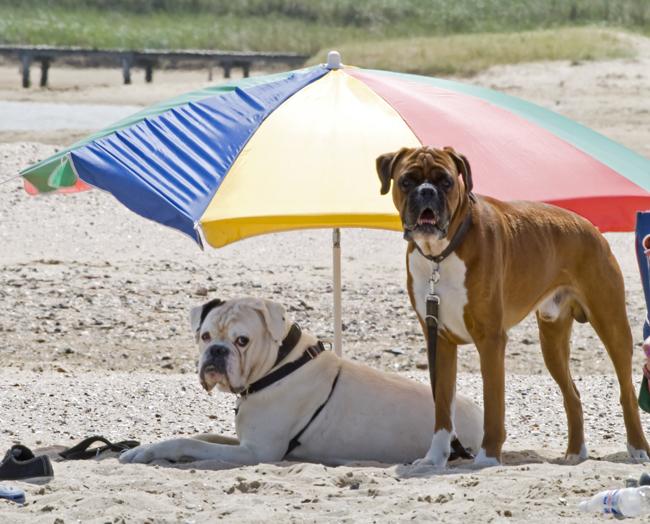 Co zrobić z psem w wakacje