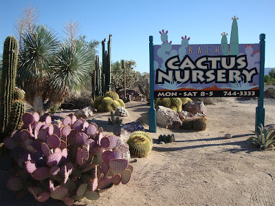 Our First Plant Focused Stop Was At Bach S Cactus Nursery On Way Into Tucson A Friend Who Used To Live There Had Told Me About This Place Years Ago