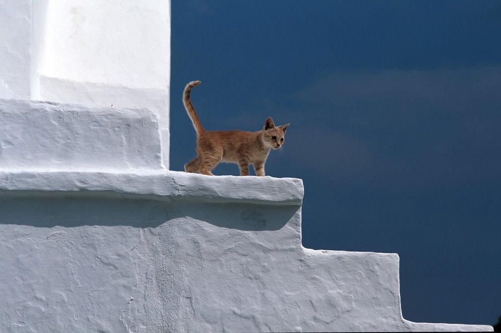 gatto-su-scala-bianca