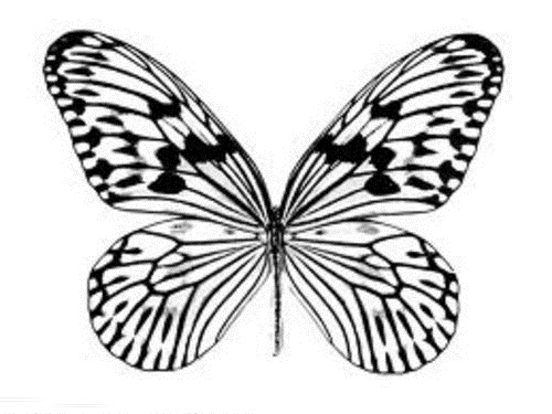 Butterfly Coloring Pages For Kids >> Disney Coloring Pages