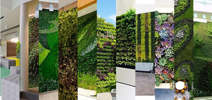 Actitud sustentable sa de cv cursos for Muros verdes beneficios