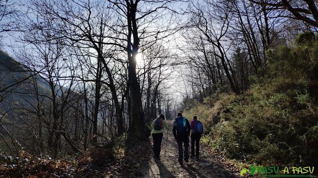 Subiendo a Brañasín por el bosque