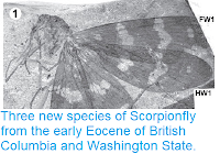 https://sciencythoughts.blogspot.com/2013/09/three-new-species-of-scorpionfly-from.html