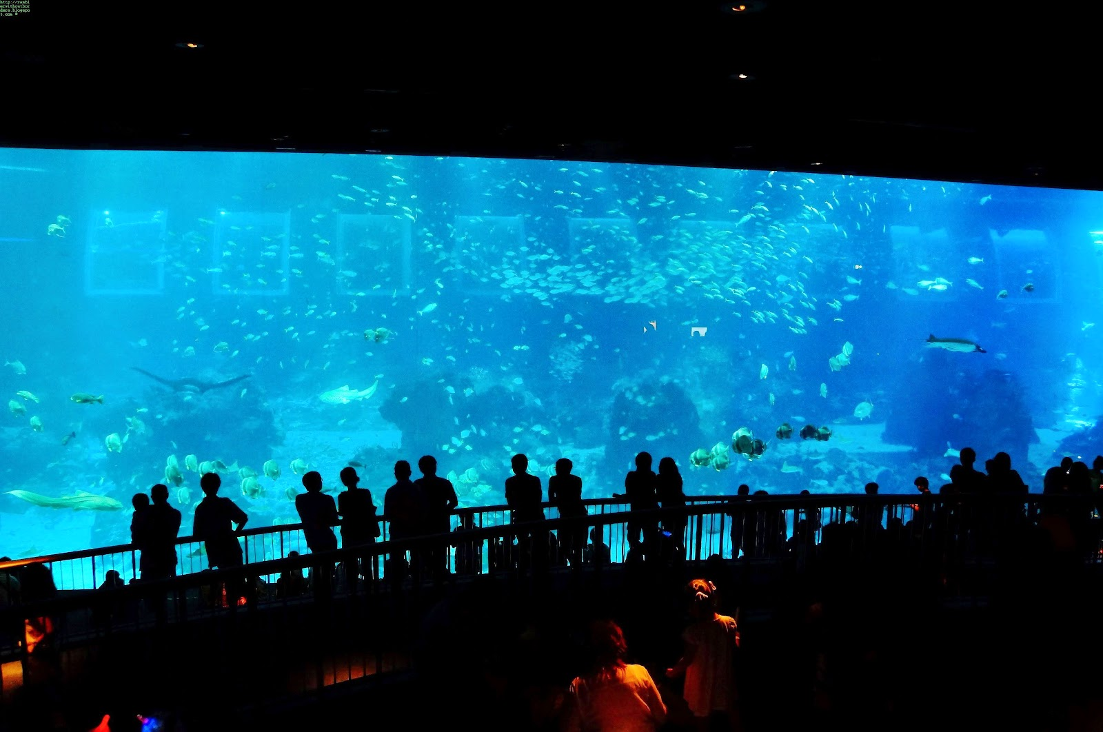 ocean gallery, S.E.A. Aquarium, Sentosa, Singapore