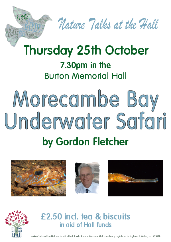 Morecambe Bay Underwater Safari