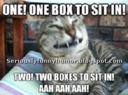 Cat - One! One box to sit in! Two! Two boxes to sit in! AAH AAH AAH!