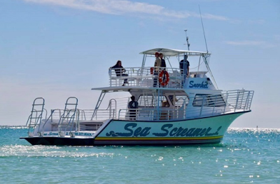 Dolphin and Snorkel Excursion Aboard the Sea Screamer 2