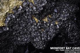 Monfort Cave - Samal Island, Davao del Norte