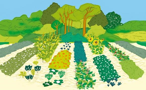 Servicios naturales, ecologicos y ambientales