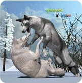 Wolves of the Arctic App