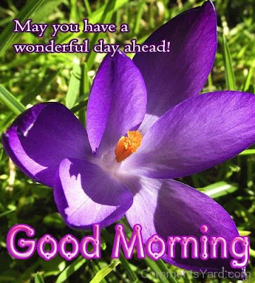 Good-Morning-Wishes-Images-Have-A-Wonderful-Day-With-great-Quotes