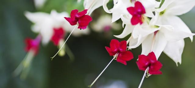 çiçek çeşitleri Ve çiçek Türleri çiçek Bakımı çiçek çeşitleri