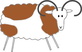 Farbvererbung Schafe