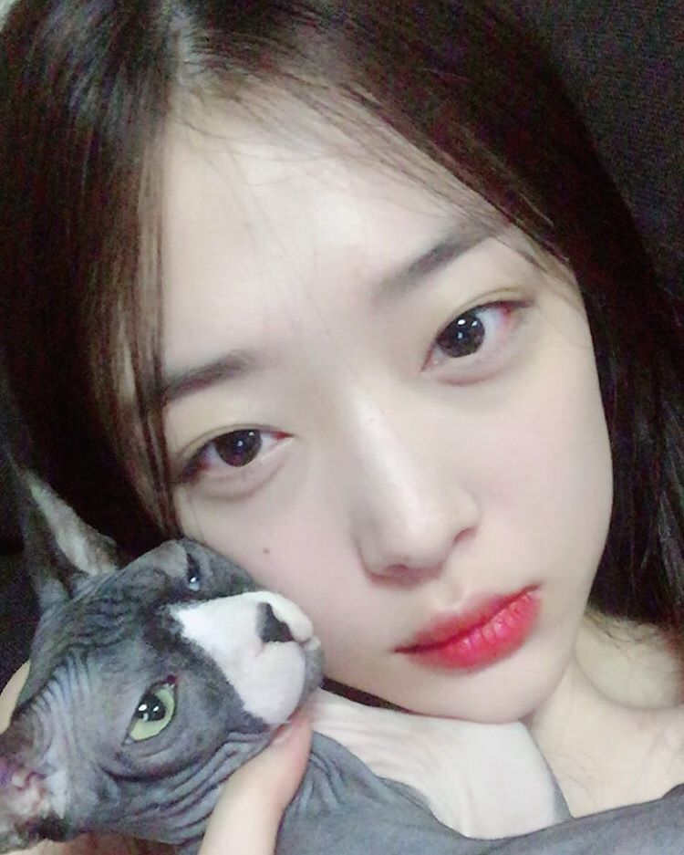 Choi Sulli Snap Cute Pictures With Her Cats - SNSD