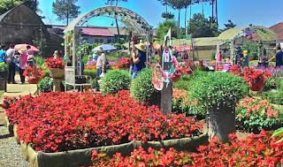 Taman Begonia Lembang Bandung