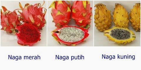 3 jenis buah naga : merah, kuning, dan putih