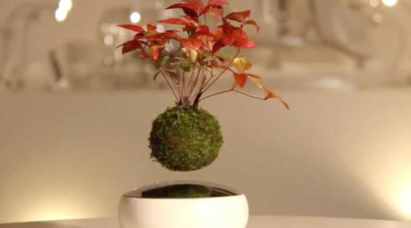 This unique floating air bonsai tree for home decoration for Unusual bonsai creations