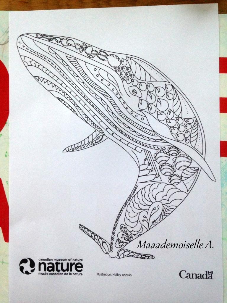 Coloriage Queue De Baleine.Maaademoiselle A Activite Baleine Bleue Decouverte