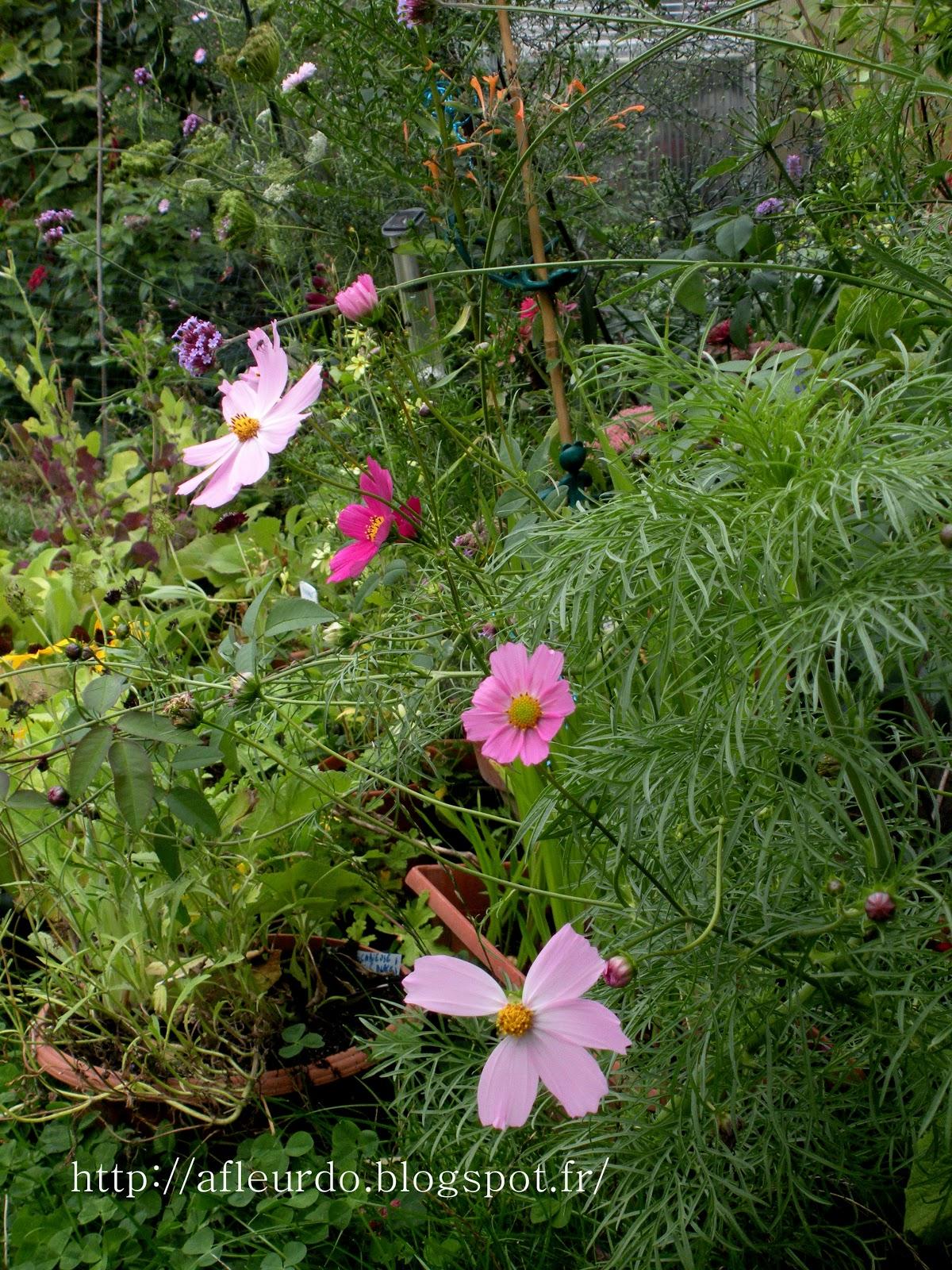 A fleur d 39 une acalmie - Pomme de terre prospere ...