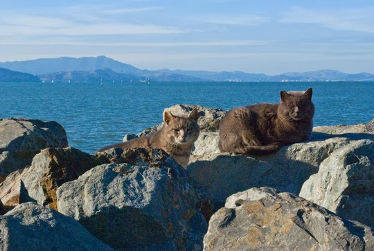 cats by the water