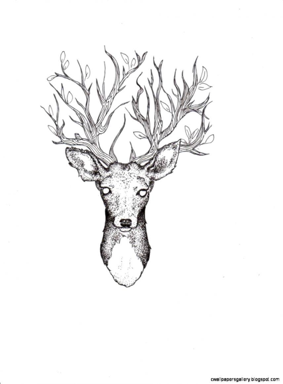 deer drawing tumblr room