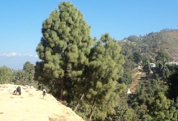 Mountain from Halesi tour