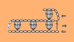 رمز غرزة الفيشارة .  الدرس 13; طريقة عمل غرزة الفيشارة . popcorn stitch. How to Crochet the Popcorn Stitch . كروشيه 2016 . كروشيه 2017 . دروس تعليم الكروشيه . دورة تعليمية لتعلم الاعمال اليدوية  . غرزة الفيشارة . . دورة تعليمية لتعلم الكروشيه .  .