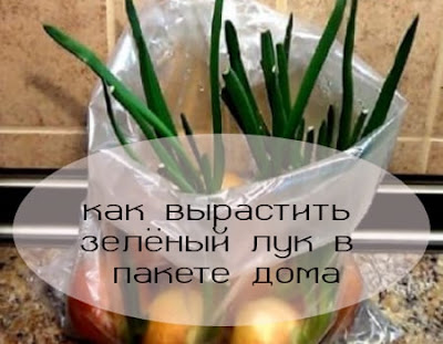 зелёный лук в пакете