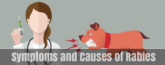 Symptoms and Causes of Rabies