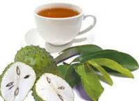 Cara Mengobati Miom dengan Menggunakan Obat Miom Herbal