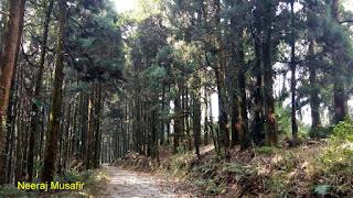 उत्तर बंगाल यात्रा - लावा से लोलेगाँव, कलिम्पोंग और दार्जिलिंग